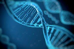 Estudio genético preventivo cardiovascular (cardio incode score)