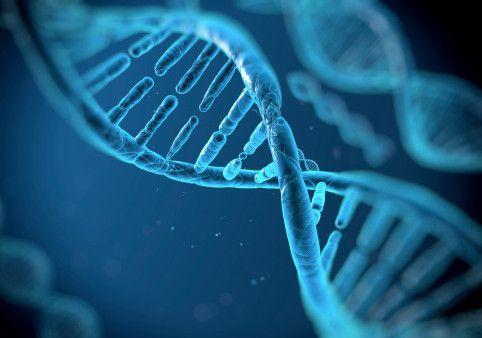 Estudio genético preventivo Cardiovacular Cardio InCode