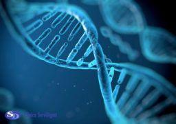 genética y la alimentación